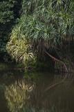 Borneo_D284