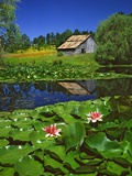 Barn and Waterlilies