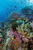 Abundance of Marine Life on a Coral Reef