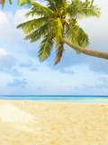 Palm Tree and Beach in the Maldives
