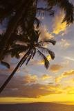 Sunset with Palm Trees in Kihei  Maui  Hawaii