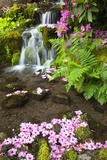 Spring Flowers Add Beauty to Waterfall at Crystal Springs Garden  Portland Oregon Pacific Northwes