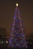Capitol Christmas Tree at Dusk in Front of US Capitol  Washington DC