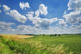 Corn Field and Cumulonimbus Clouds
