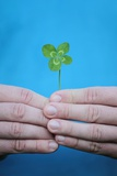 Man Holding Four-Leaf Clover