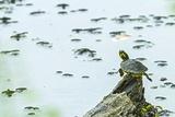 Slider (Turtle)