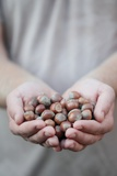 Man in Khaki T-Shirt Holds Hazelnuts in His Palms