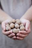 Man in Khaki T-Shirt Holds Walnuts in His Palms