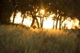 Duba Plains Landscape