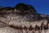 Eye of an American Crocodile