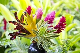 Hawaiian Tropical Flower Arrangement
