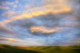 Rolling Hills of Green Spring Wheat and Evening Bright Clouds