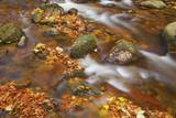 Forest Brook with Beech Leaves in Autumn