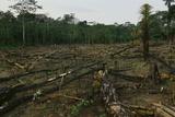 Slash and Burn Agriculture in Peru