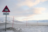 At the Edge of the Settlement Signs Warn Visitors and Tourists of the Danger of Polar Bears
