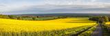 Rape Field  Guildford  Surrey  England  United Kingdom  Europe