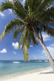 Beach Scene with Palm Trees