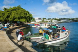 Little Boats in the Harbour of Neiafu  Vavau  Vavau Islands  Tonga  South Pacific  Pacific