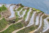 Dragon Spine Rice Terraces  Longsheng  Guangxi  China  Asia