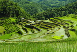The Rice Terraces of Banaue  Northern Luzon  Philippines  Southeast Asia  Asia