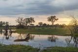 Okavango Delta  Botswana  Africa