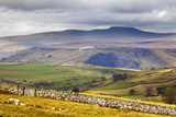 Across Ribblesdale to Ingleborough from Above Stainforth Near Settle  Yorkshire Dales  Yorkshire