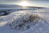 Snow-Covered Winter Landscape Near Gullfoss Waterfall  Iceland  Polar Regions