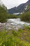 Roaring River  Wildflowers and Mountains  Lodal Valley Near Kjenndalen Glacier