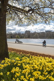 Visitors Walking Along the Serpentine with Daffodils in the Foreground  Hyde Park  London  England