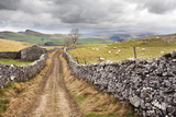 The Pennine Bridle Way Near Stainforth in Ribblesdale  Yorkshire Dales  Yorkshire  England