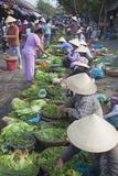 Women Vendors Selling Vegetables at Market  Hoi An  Quang Nam  Vietnam  Indochina