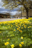 Visitors Walking Along the Serpentine with Daffodils in the Foreground  Hyde Park  London