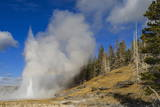 Grand Geyser Erupts  Forcing Steam High into the Air  Upper Geyser Basin