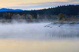 Wildfowl in Flight over Snake River Surrounded by a Cold Dawn Mist in Autumn (Fall)