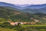 Slovenia Wine Region Countryside  Goriska Brda (Gorizia Hills)  Slovenia  Europe