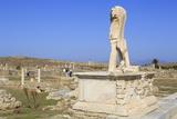 Delos Archaeological Ruins  Delos  Cyclades  Greek Islands  Greece  Europe