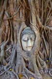 Stone Buddha Head Entwined in the Roots of a Fig Tree  Wat Mahatat  Ayutthaya Historical Park