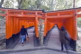 Torii Gate at Fushimi Inari Jinja  Shinto Shrine  Kyoto  Honshu  Japan  Asia