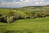 Cotswold Landscape  Near Winchcombe  Cotswolds  Gloucestershire  England  United Kingdom  Europe