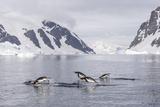 Adult Gentoo Penguins (Pygoscelis Papua) Porpoising  Danco Island  Antarctica  Polar Regions