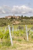 Vineyards Near to Villa a Sesta  Chianti  Tuscany  Italy  Europe