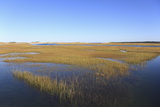 Salt Marsh  Sandwich  Cape Cod  Massachusetts  New England  United States of America  North America