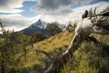 Torres Del Paine National Park  Patagonia  Chile  South America