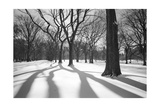 Central Park Trees and Shadows In Snow - NYC Park
