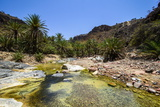 Very Green Pond in a Valley in the Dixsam Plateau on the Island of Socotra  Yemen  Middle East