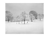Prospect Park  Brooklyn In Snow2 - Winter Scene With Dog
