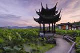 Pavilion  Lotus Field and Zig Zag Bridge at West Lake  Hangzhou  Zhejiang  China  Asia