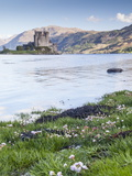 Seathrift Flowers in Front of Eilean Donan Castle and Loch Duich  Highlands  Scotland