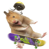 Hamster with Skateboard and Helmet