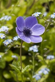 Longwood Garden Spring